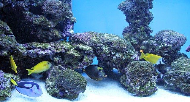 décorer aquarium